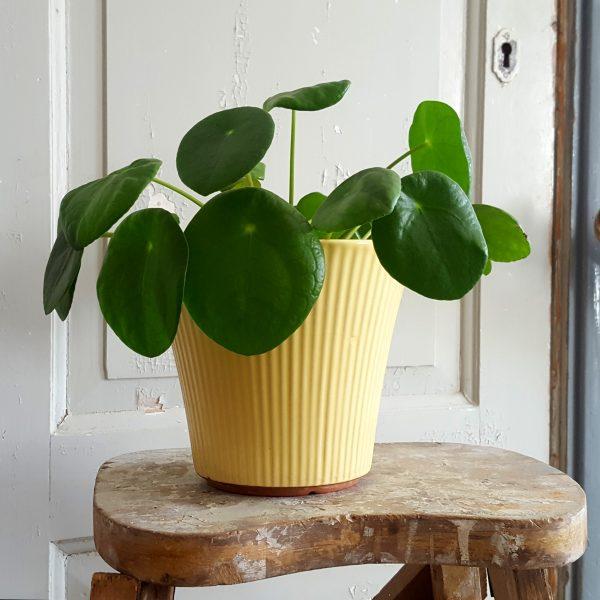 blomkruka-freja-modell-5-gul-upsala-ekeby-1