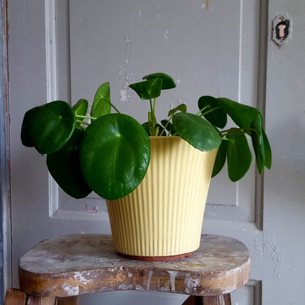 blomkruka-freja-modell-5-gul-upsala-ekeby-2