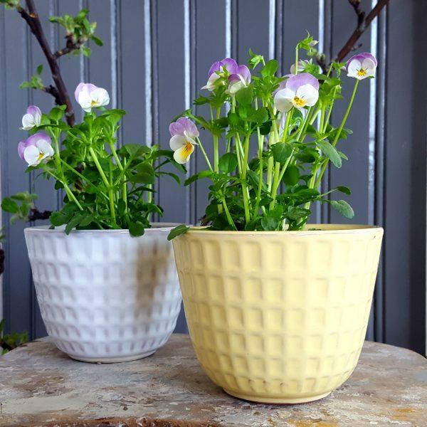 blomkruka-gunilla-nr-2-gul-upsala-ekeby-bertil-nilsson-1