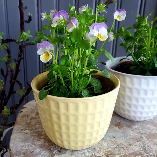 blomkruka-gunilla-nr-2-gul-upsala-ekeby-bertil-nilsson-4
