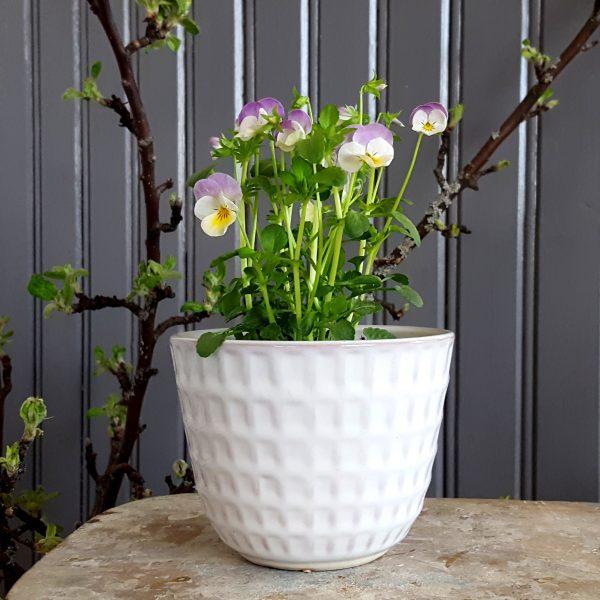 blomkruka-gunilla-nr-2-vit-upsala-ekeby-bertil-nilsson-3