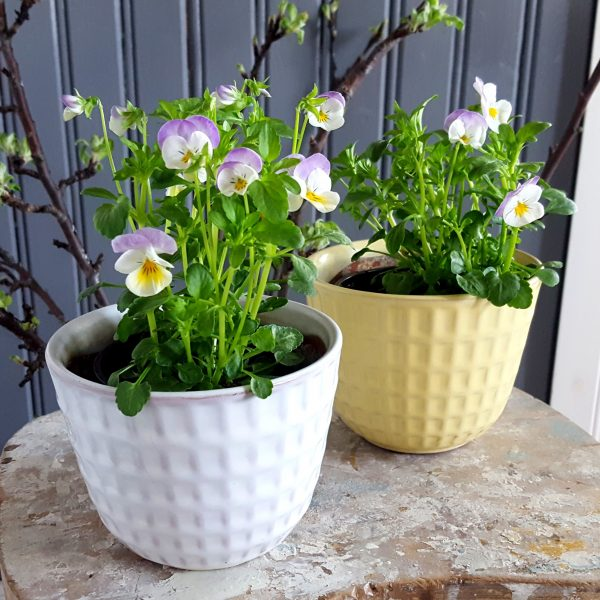blomkruka-gunilla-nr-2-vit-upsala-ekeby-bertil-nilsson-4